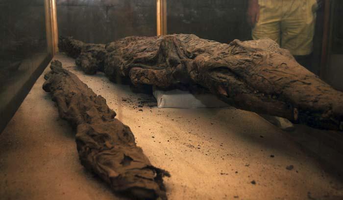 Cocodrilos momificados
