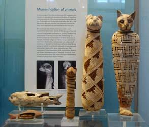 Momia de gato exhibida en un museo